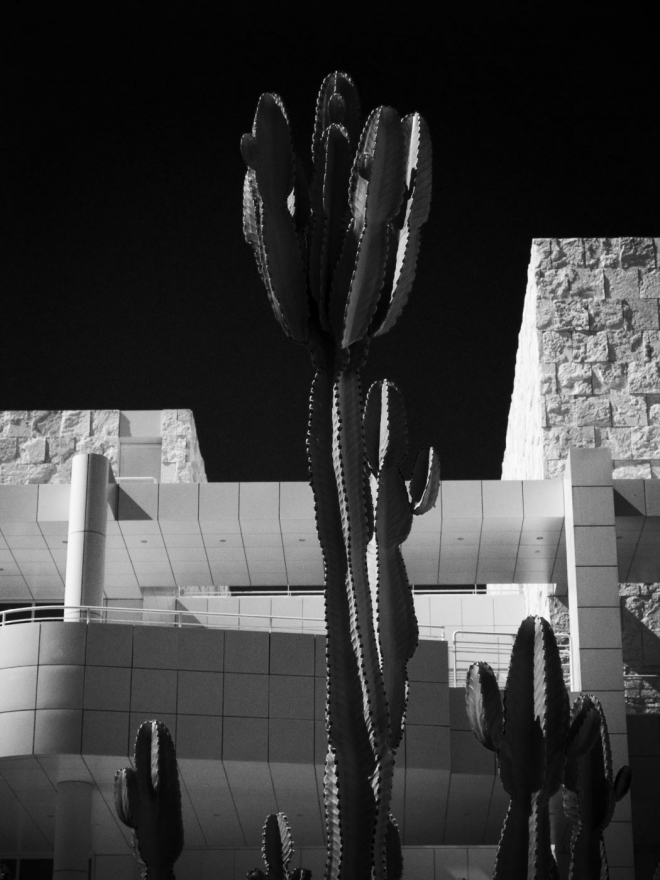 Getty-cacti