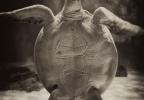 TurtleHi