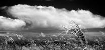 Kawiai_grass
