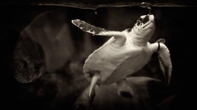 TurtleBubble